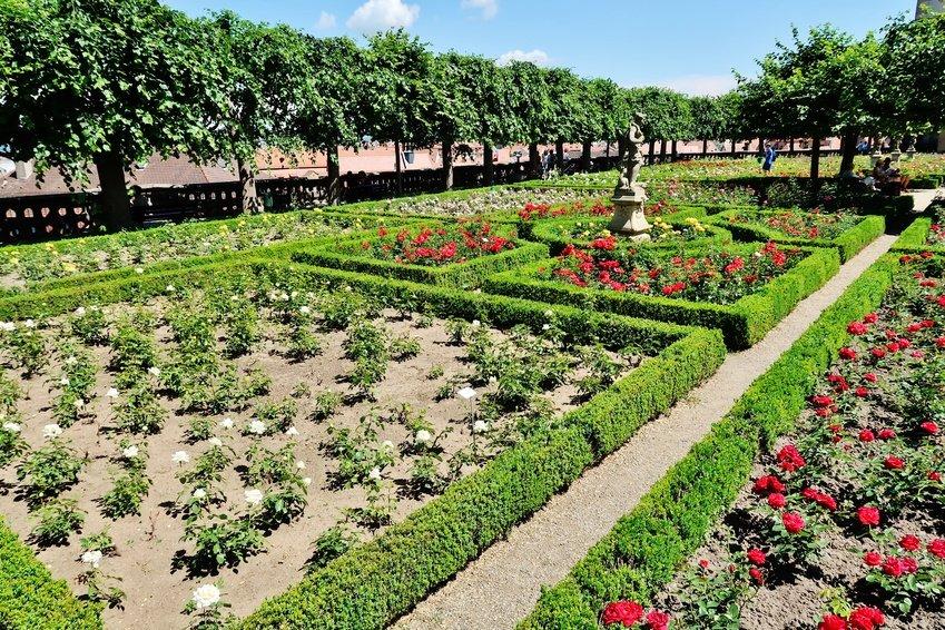 Bamberg rose Garden
