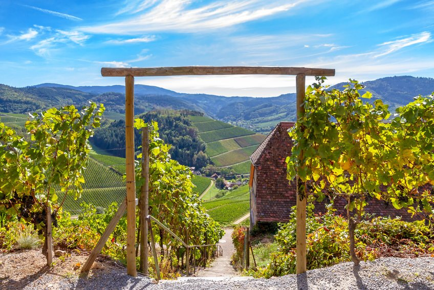Black Forest Vineyards