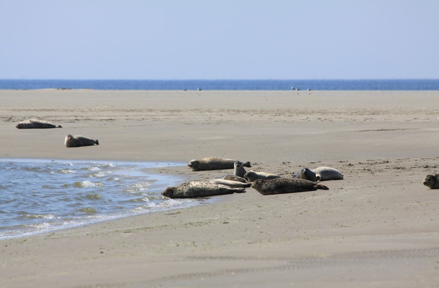 Seal banks in Borkum, Germany